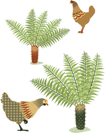 ferns-and-chickens